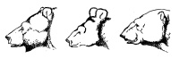 Heads of bears.svg